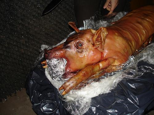 pig-2009